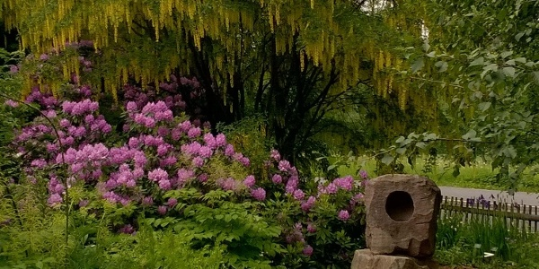 Blick in den Botanischen Garten Schellerhau