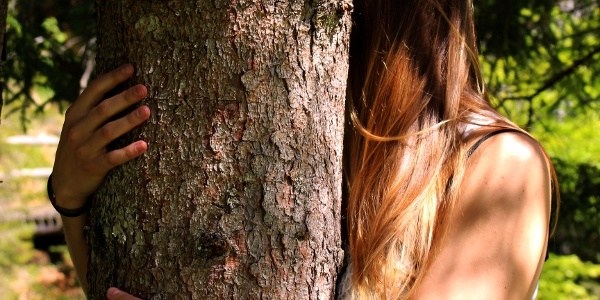 Abbraccio degli alberi