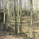 Wald im März noch fast unbelaubt