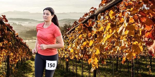 Start bei Weingut Trippel