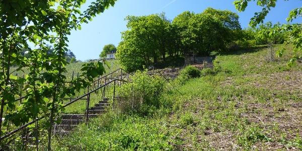 Treppe zum Rebenhaus