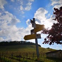 Foto von : WT5 Entlang des Württembergischen Weinwanderweges •  (13.05.2019 22:54:06 #1)