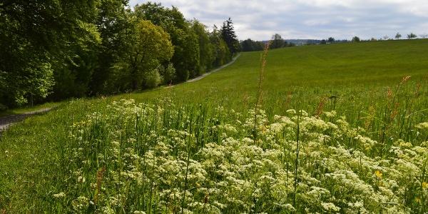 Offene Landschaften und saftige Wiesen tun sich zwischen den Ortsteilen Rotensol und Neusatz auf