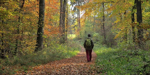 Bunte Waldlandschaft