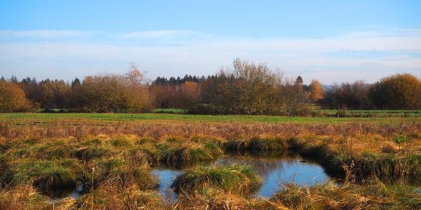 Kleine Seen im Ried