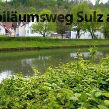Jubiläumsweg Wanderung Sulz am Neckar - Fotografieren und Wandern