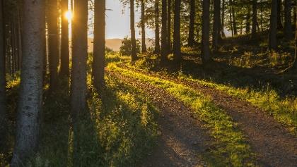 Wald bei Schmallenberg