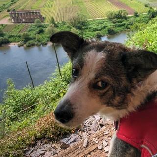 Mit Hund durch den Calmont-Klettersteig - eine besondere Genusstour