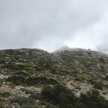 Foto von : In den Bergen über Valldemossa •  (29.05.2019 18:52:14 #3)