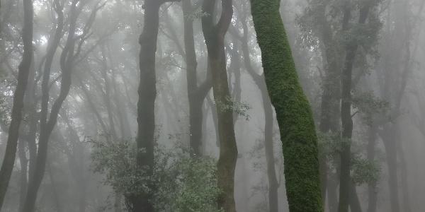 Monteluco - Götterwald