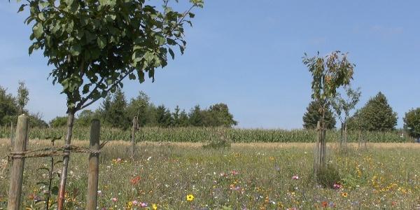 Der Stiftungsgarten in der Nähe des Waldensersteins
