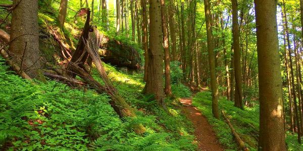 Schmale Waldpfade bestimmen das Routenprofil