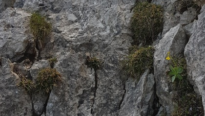Kletterstelle I-II