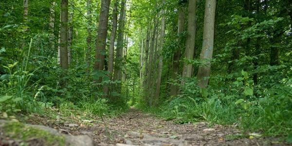Schmale Pfade auf der Golddorf Route Wenholthausen