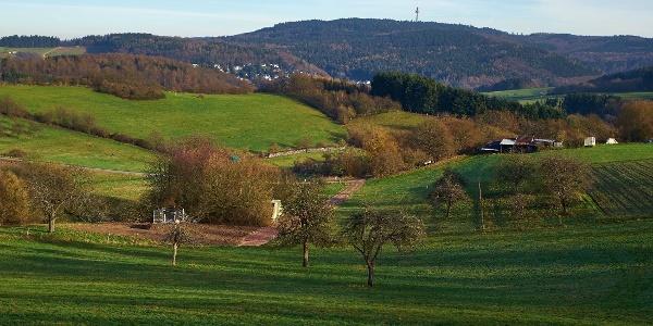 Wiesen bei Bärstadt und Hohe Wurzel