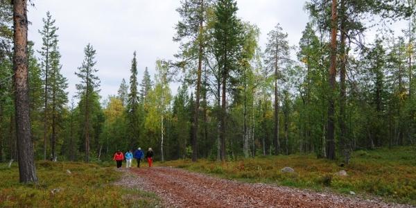 Hiking_Levi_Lapland