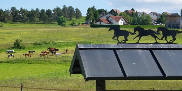 Pferdekoppel bei Böttingen