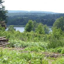 Waldteil in der Nähe des Campings