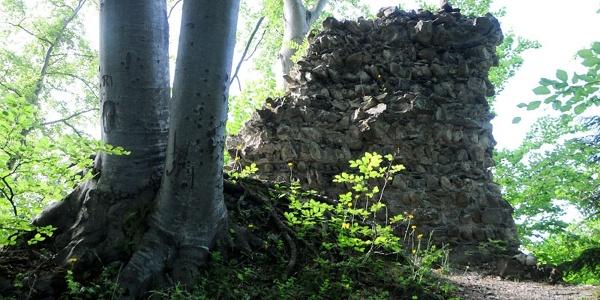 Weiler, Burgruine Alt Montfort