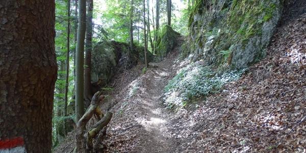 Waldweg Richtung Alatsee