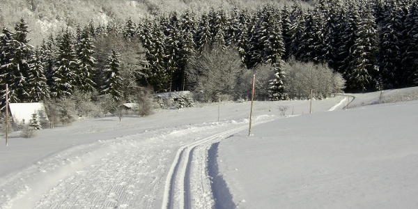Loipe in Altenau