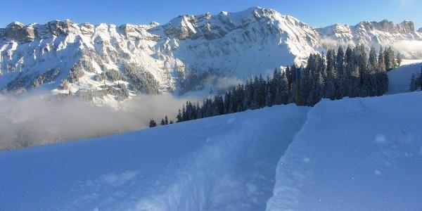 Schneeschuhtrail auf die First. Im Hintergrund die Schafmatt.