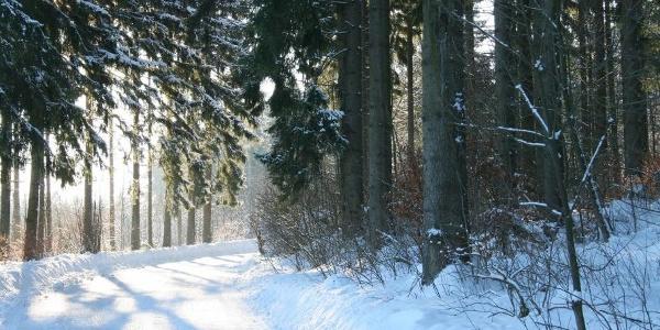 Winterwanderweg Braunlage
