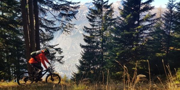 Ochsenberg Trail