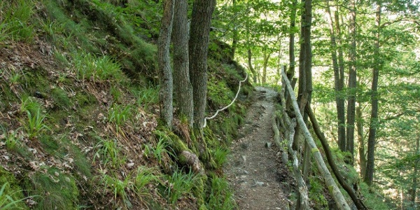 Dieser Weg schafft Abstand vom Alltag: Naturnahe, teilweise felsige Pfade, …