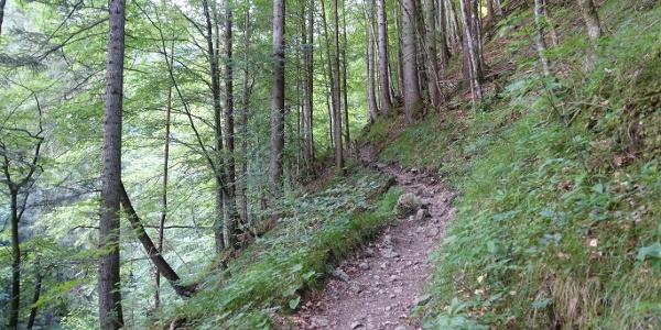 Wanderweg in der Reichenbachklamm
