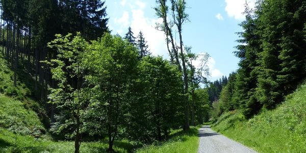 Inmitten der Südharzer Wälder