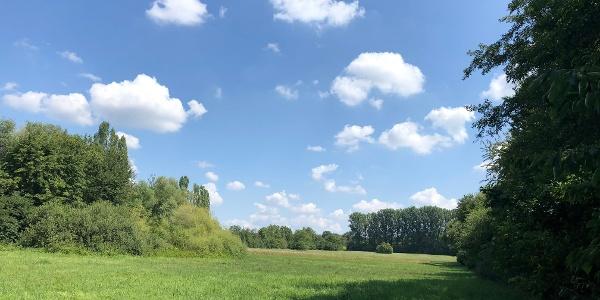 Wiesenlandschaft mit schön Wetter Wolken