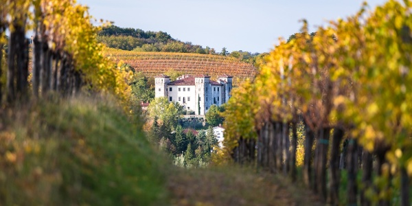 View of the Dobrovo Castle from a Vineyard