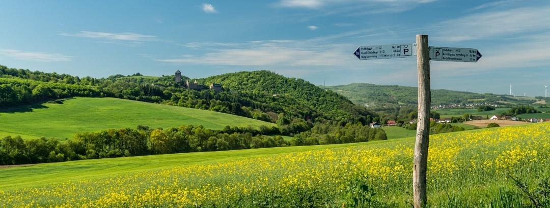 Aussicht auf Burg Thallichtenberg vom Preußensteig