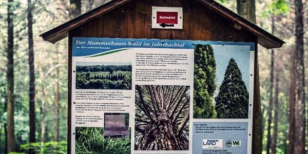 Infotafel im Mammutbaum-Wald