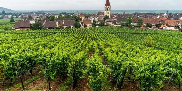 View to Ammerschwir