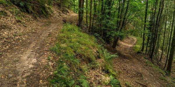 Winding Woodland Path