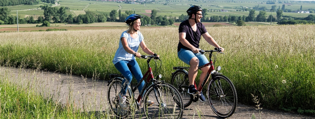 Radfahrer auf dem Radweg Deutsche Weinstraße