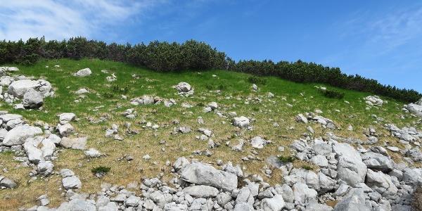 Gipfel Grünkogel