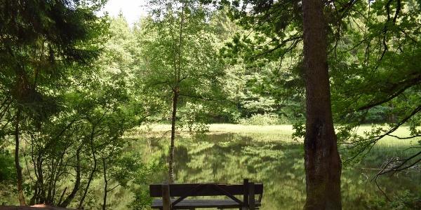 Rybník Buschmühlenteich v lese Abtwald mezi městy Gelenau a Burkhardtsdorf