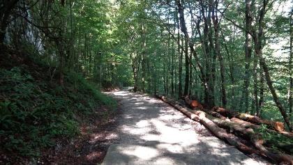 Gozdna cesta do planine