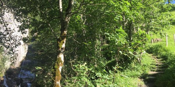 Einstieg in den Waldweg kurz oberhalb von Brand