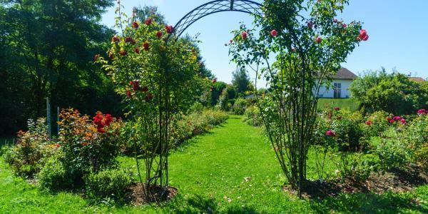 Rosengarten in Gennach