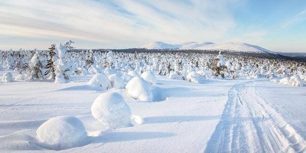 Snowy Fell Pallastunturit seen from Fell Sammaltunturi