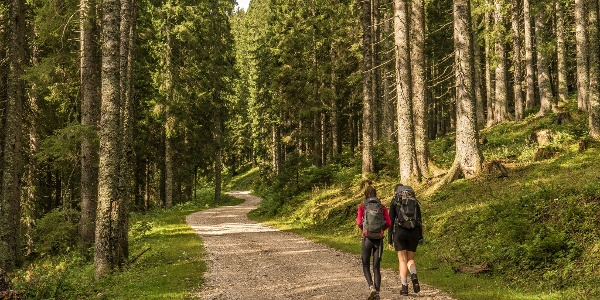 Woodland Walk from Pokljuka