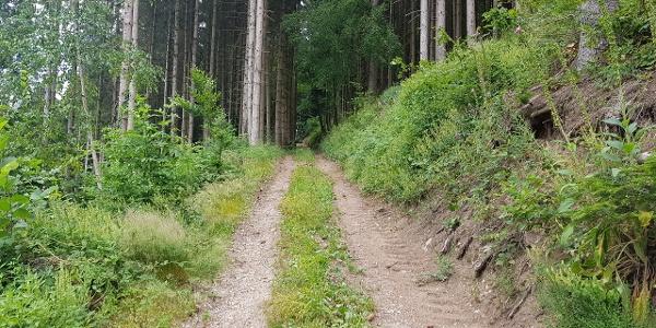 Abstieg Gebelehof Richtung Schiltach