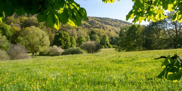 Blick auf Bad Münstereifeler Wälder