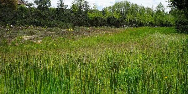 Besondere Pflanzen und Tiere in der Eggstätt-Hemhofer Seenplatte