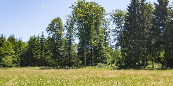Blick auf Bäume über Wildwiese