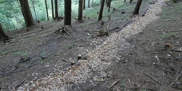 Waldweg zur Arzbachhöhe – ein Lob dem Wegewart!